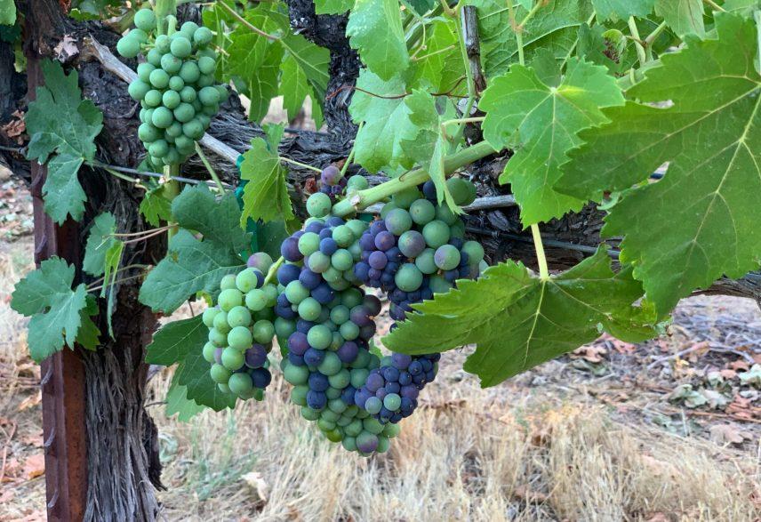 Wild Diamond Vineyards 5