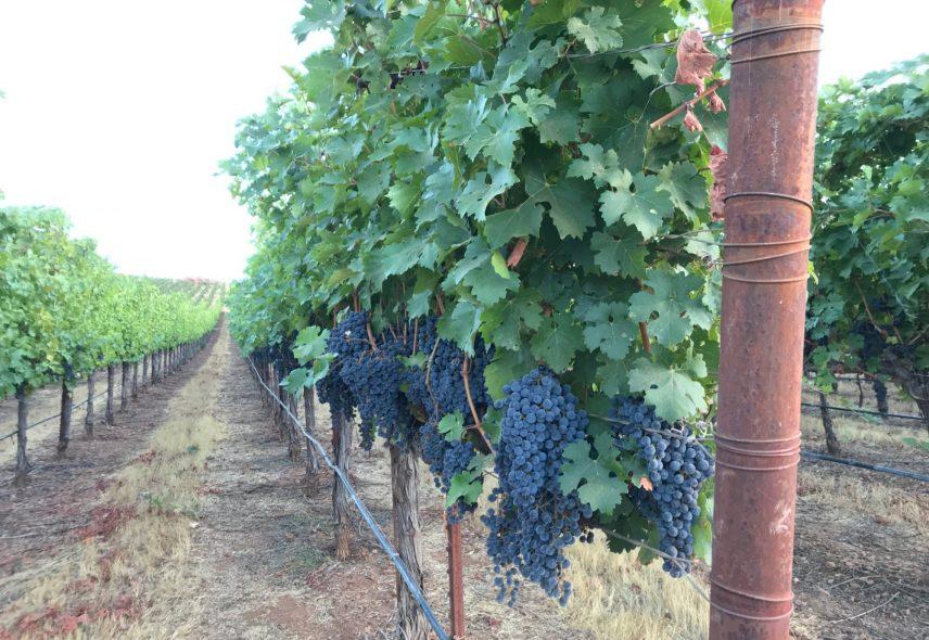 Wild Diamond Vineyards 7